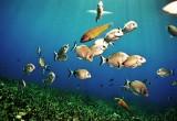 MED FISH